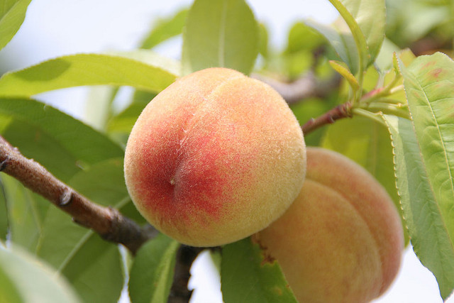 фрукты в крыму в июне