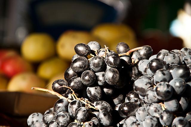 Фото: MarcoPolo, con la genetica lungo la Via della Seta / flickr.com